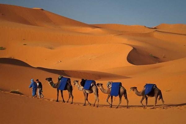 Le Desert du Sahara et Le Haut Atlas 02