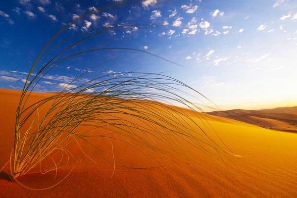 Le Sud-Marocain, ses Oasis, Dunes et Désert 02