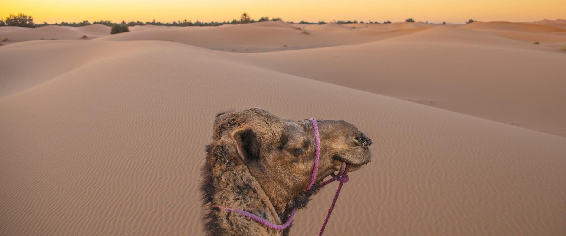 Voyages Expeditions Maroc - randonnee dans le desert