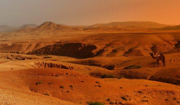 Excursion d'une journée dans le désert d'Agafay et les montagnes de l'Atlas et à dos de chameau au départ de Marrakech: