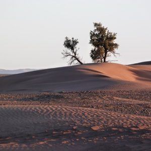 le desert marocain 4