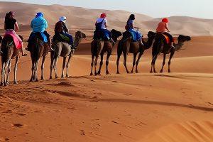 poser sur le dos de chameaux