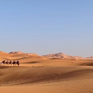 sahara desert tours